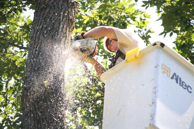 tree service chicago