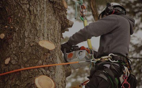 tree removal arlington tx
